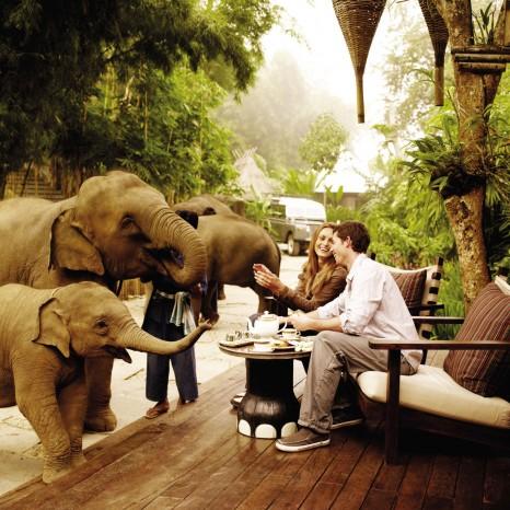 Слоновья ферма в Тайланде