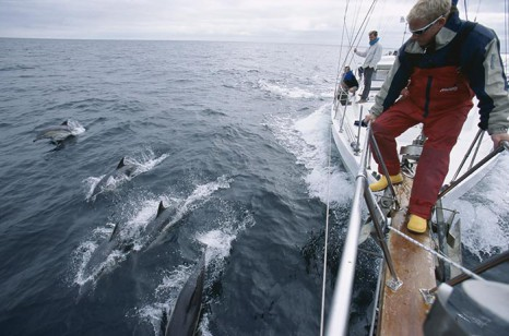 Crew of research yacht, Silurian, watching common dolphins racing for the bow wave. Hebrides, Scotland.