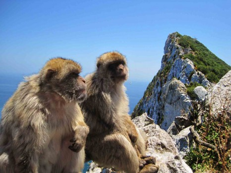 gibraltar-monkeys-1505654172