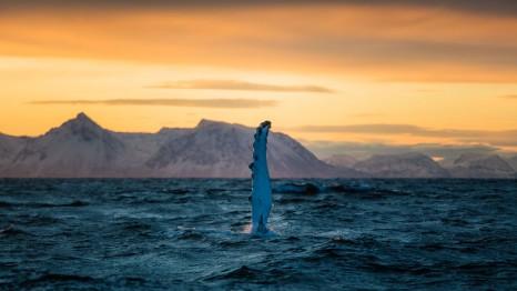 anhede-norway-andenes-humpback-whale-safari-05