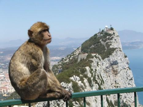 Гибралтар и магот