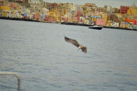 Неаполитанский залив: Капри-Искья - Storm crew