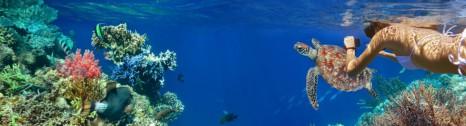 Scuba Diving Teaser