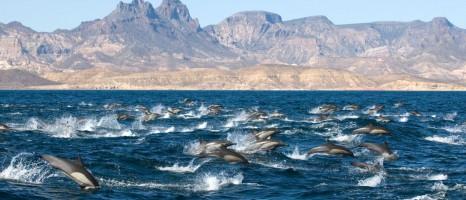 01_hauptbild_relax_resource_whale_watching_la_gomera